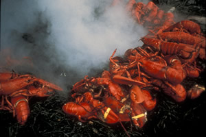 A look at a typical lobster bake